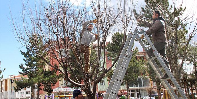 Park ve Bahçelerin Bakımları Yapılıyor