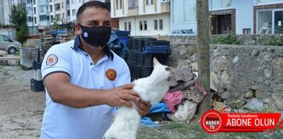 Dere Yatağına Düşen Kediyi İtfaiye Kurtardı- Video Haber