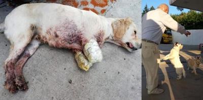 Havza'da yaşanan köpek olayı herkesi derinden üzdü