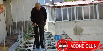 Havzalı Vatandaş Saksıda Sebze Üretiyor- Video Haber