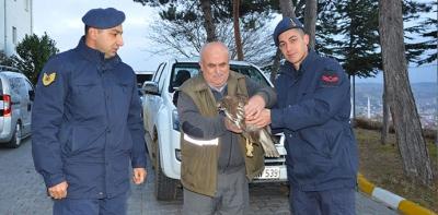 Jandarma Yaralı Şahine Sahip Çıktı