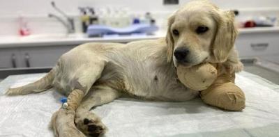 Ön Bacakları Kesilmiş Köpekle İlgili 3 Gözaltı